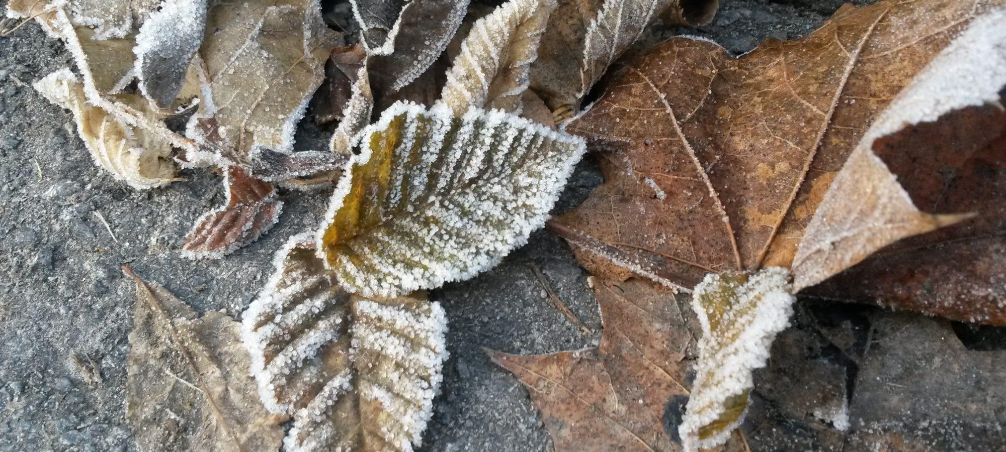 Herbstliches Laub mit Raureif