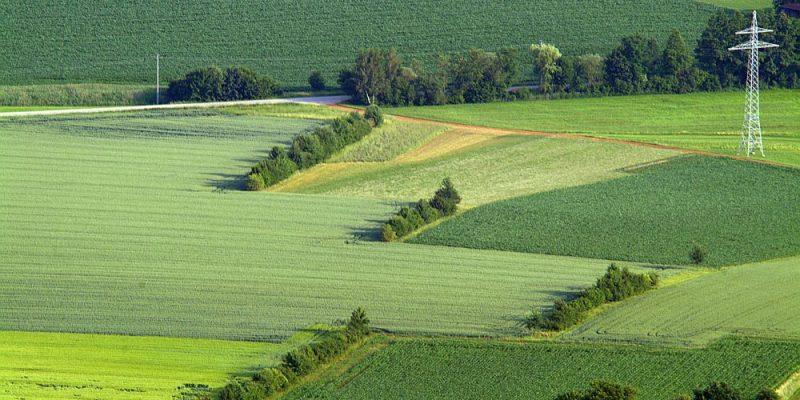 Luftbild von Hecken an Feldrändern in Buch am Erlbach - Vatersdorf.