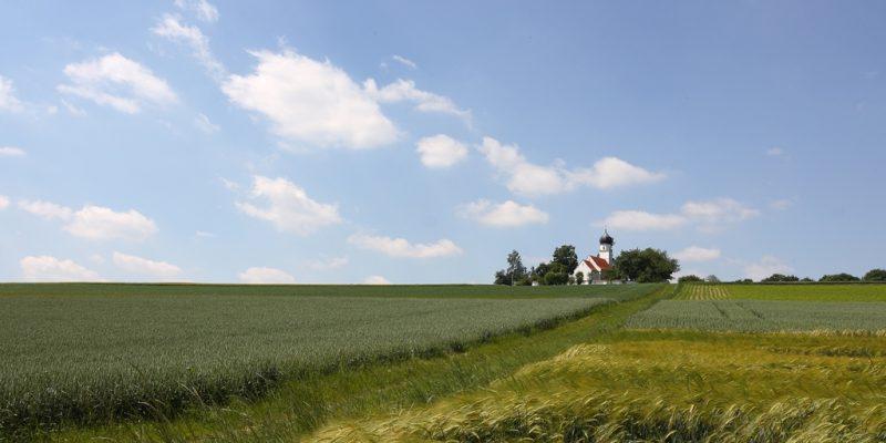 Kirche St. Wolfgang bei Landshut inmitten grüner Weizenfelder