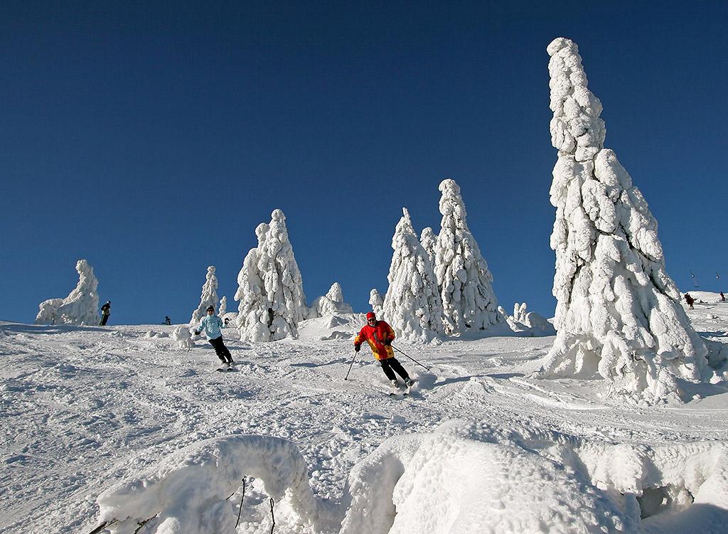 Zwei Skifahrer zwischen den beschneiten Bäumen, den sogenannten Arbermandl